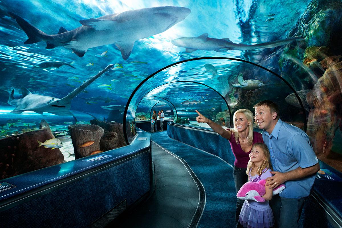 family at ripley's aquarium in myrtle beach