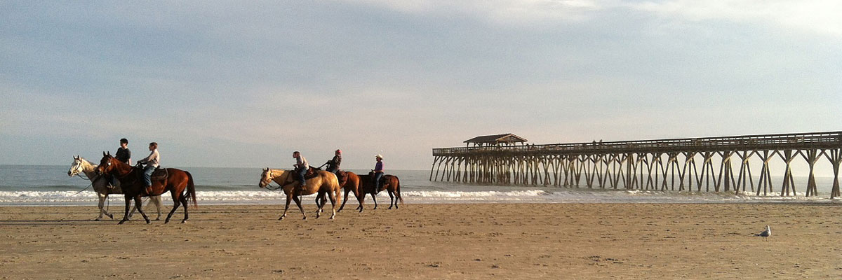 Horses On The Beach In Myrtle During Winter